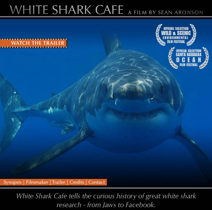 White Shark Cafe - The Film